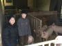 Minis zu Gast auf dem Bauernhof